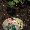 Garden rock-flower identifier_IMG_3140