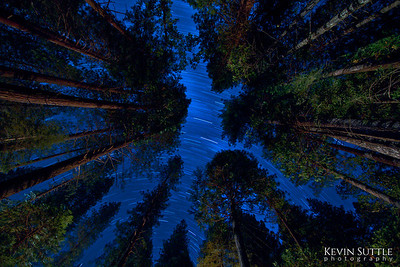 Time Passing Overhead - Northern California This is a 30 minute exposure looking straight up through the forrest canopy.