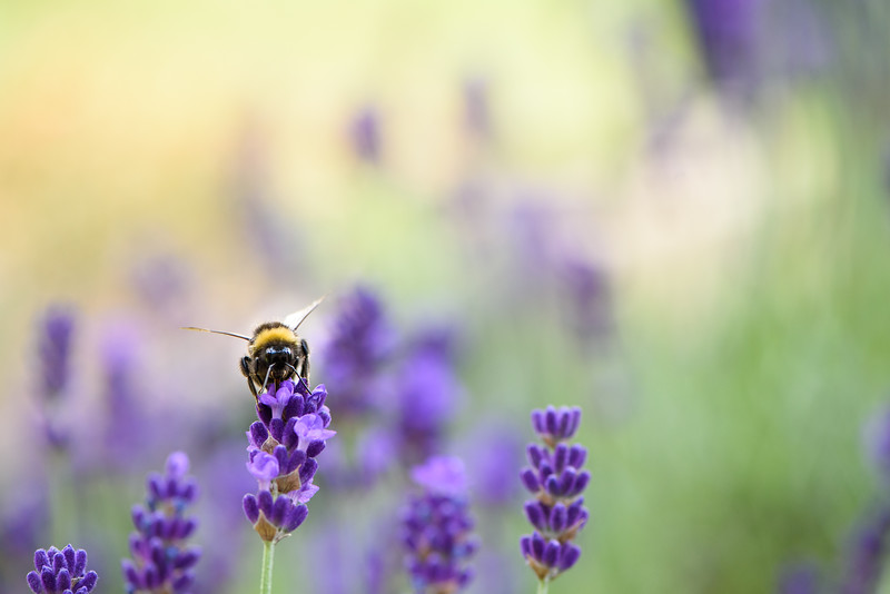Bee in Germany!