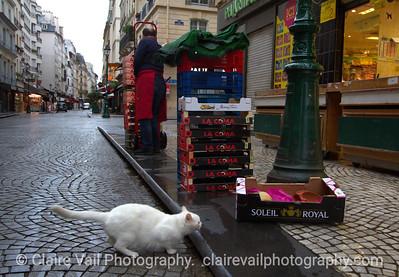 White Cat, Rue Montorgueil