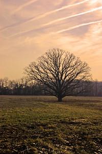 birchrunvilletree