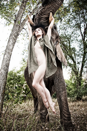 A woman is lifted elegantly and playfully by a domestic elephant.