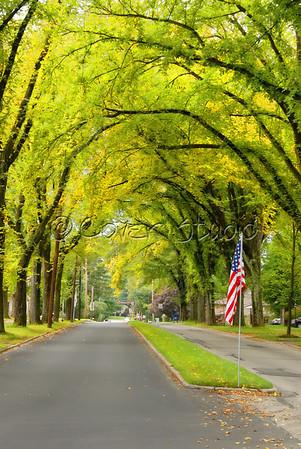 Road Scenic