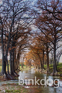 thought his photo had great perspective with the trees forming an archway for the stream to pass thru :-)
