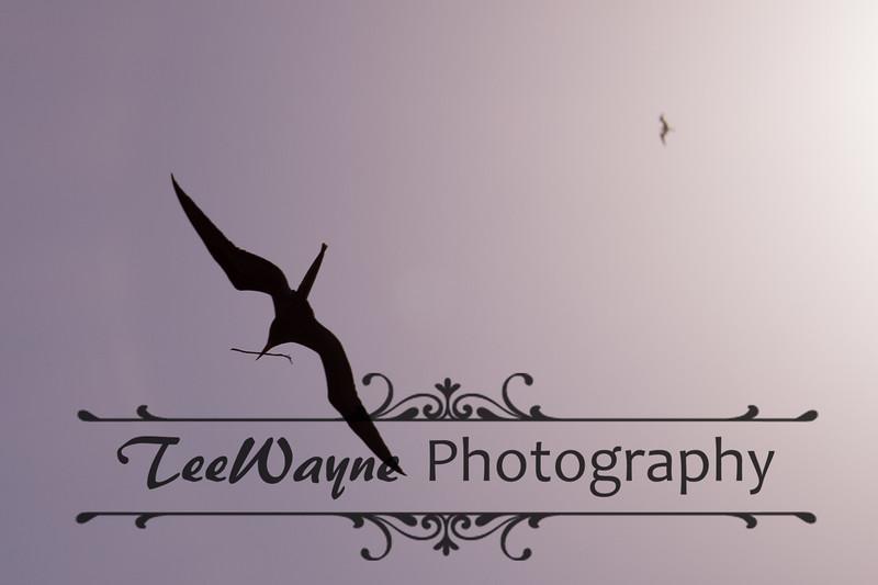 Contoy-LG-_TEF1193-
