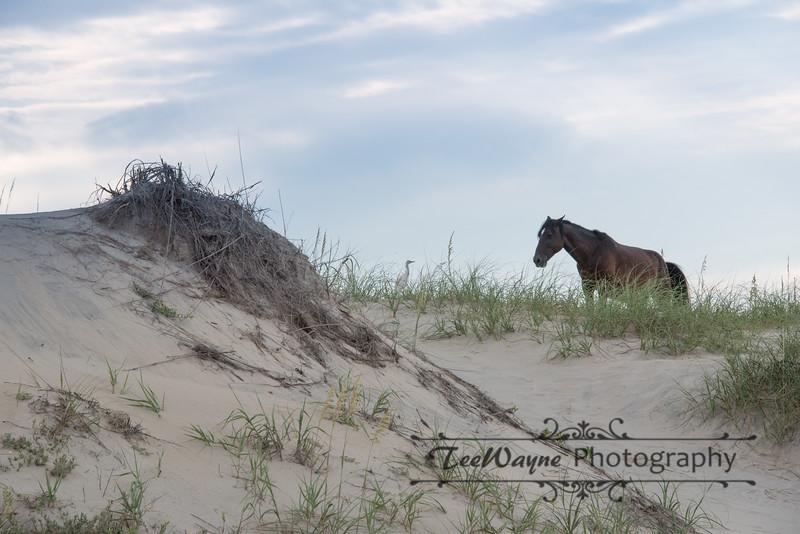 _TD75797Corolla-Wildhorses-LG