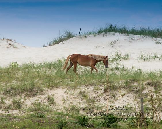 _TD75848Corolla-Wildhorses-LG