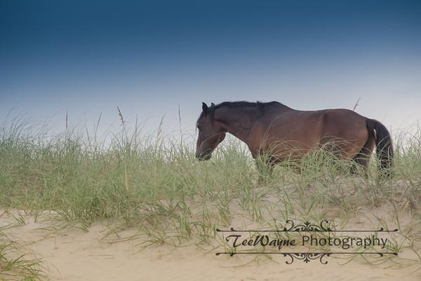 _TD75805Corolla-Wildhorses-LG