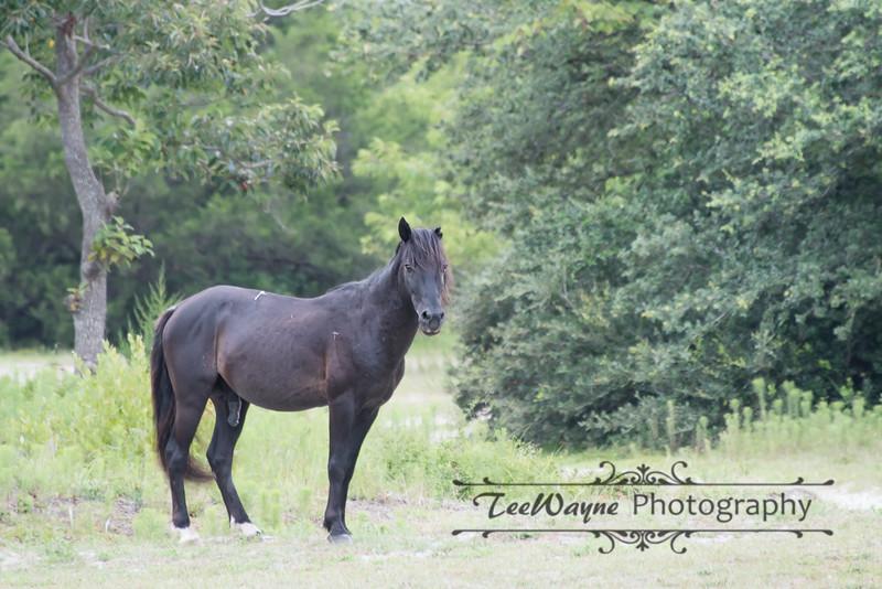 _TD75853-EditCorolla-Wildhorses-LG