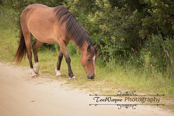 _TD75860-Edit-2Corolla-Wildhorses-LG