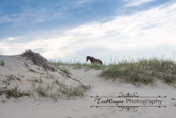 _TD75799Corolla-Wildhorses-LG