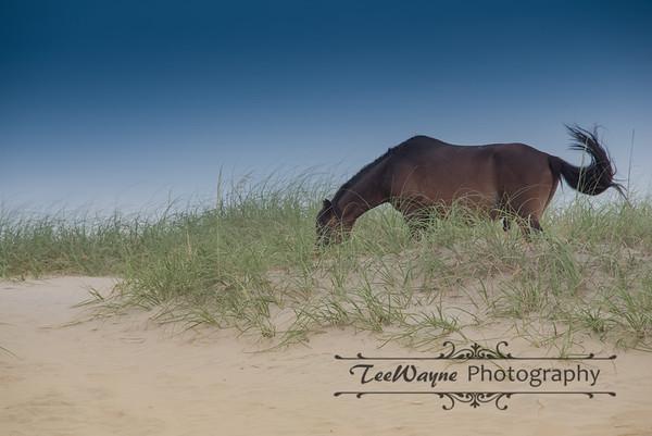 _TD75808Corolla-Wildhorses-LG