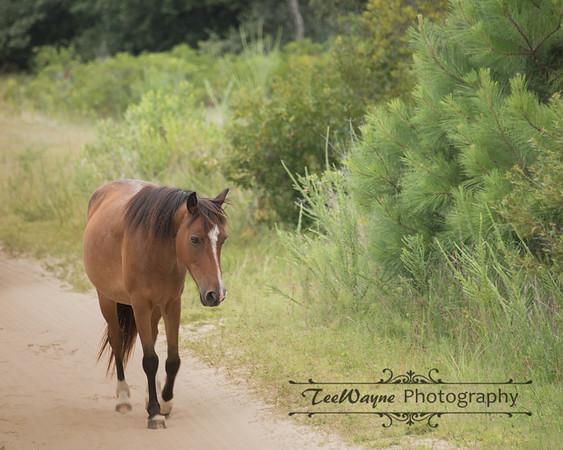 _TD75856-EditCorolla-Wildhorses-LG