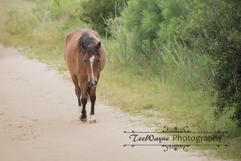 _TD75858-EditCorolla-Wildhorses-LG