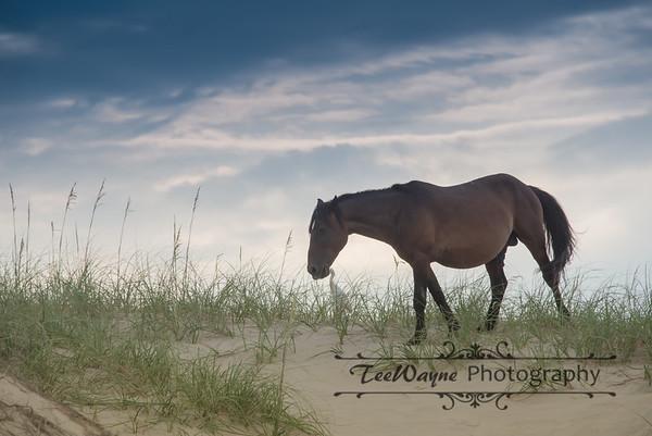 _TD75803Corolla-Wildhorses-LG