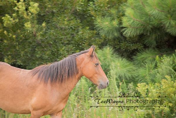 _TD75863-EditCorolla-Wildhorses-LG