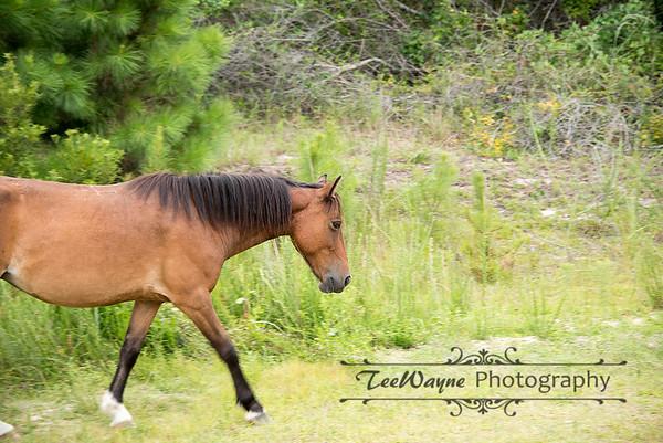 _TD75865-EditCorolla-Wildhorses-LG
