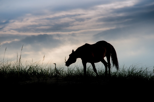_TD75802Corolla-Wildhorses-LG