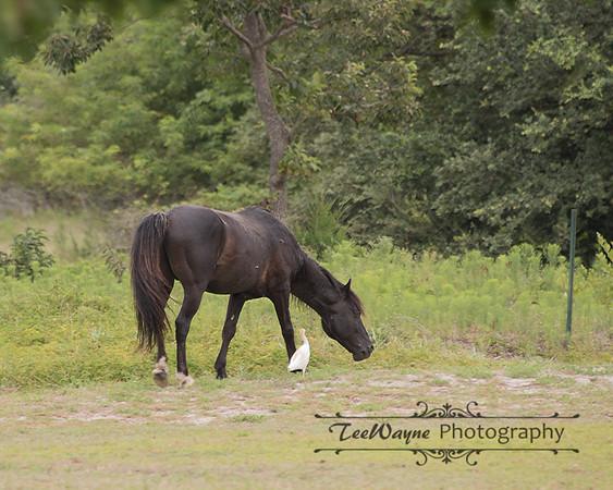 _TD75849-EditCorolla-Wildhorses-LG