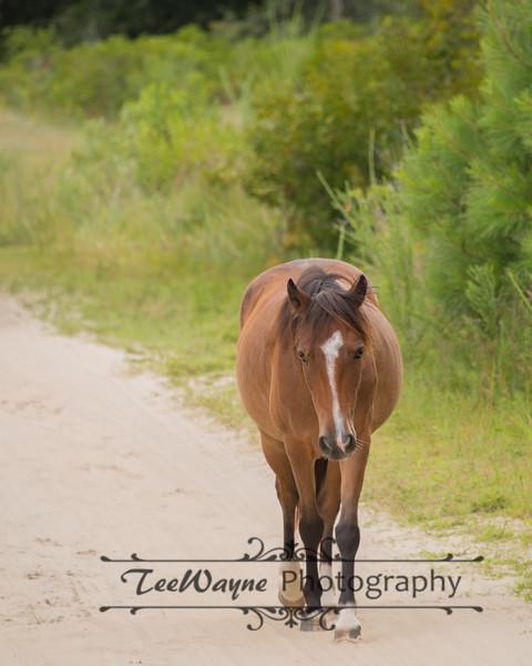 _TD75859-EditCorolla-Wildhorses-LG