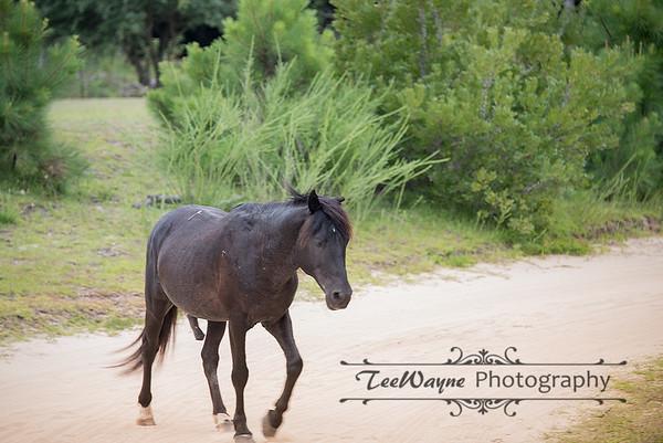 _TD75867-EditCorolla-Wildhorses-LG
