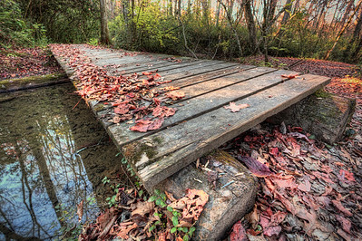 Leafy Bridge Maryville College woods