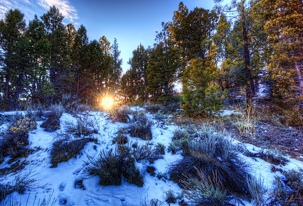 Sun through the snowy trees. Big Bear California