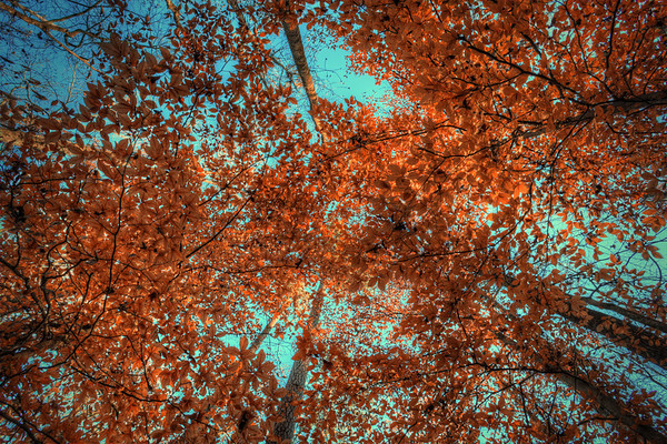 Leafy Had a good walk through the woods in Tennessee.  Going from the desert to this is a slight culture shock, in a good way.  It was a little late to get most of the good color on the trees but I found a few.