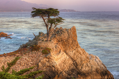 Lone Cypress If you're down in the Monterey/ Carmel area there is a toll road that takes you around Pebble Beach called 17 mile drive.  The toll is $9.75 and very much worth it.  It will take you around the Monterey Peninsula, much of the drive is along the coast.  The Lone Cypress is the official symbol of Pebble Beach.