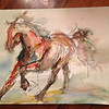 Horse Study- watercolor and pencil on paper