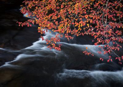 Fall Flow
