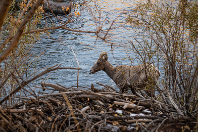 Wildlife by the water