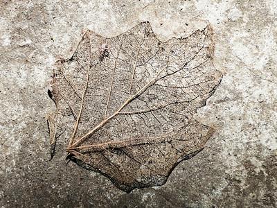 Leaf Long Dead