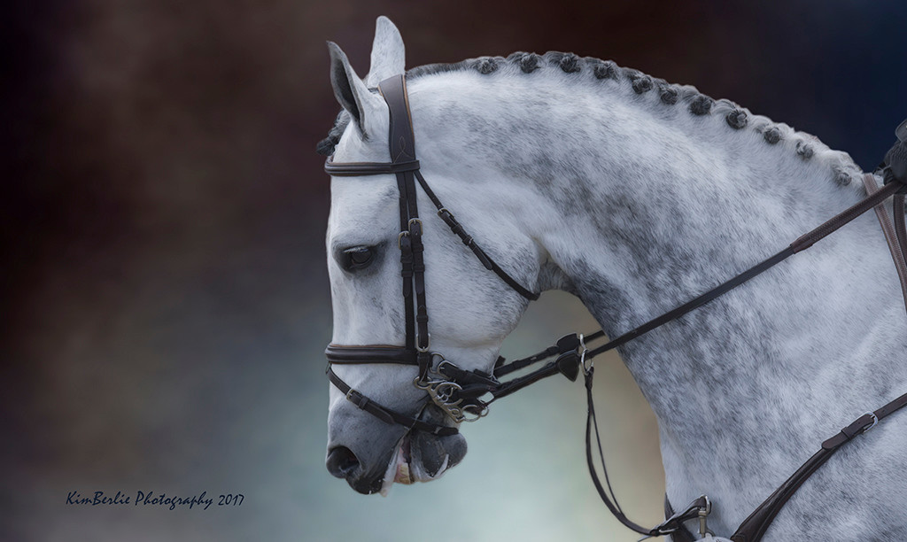 Portrait of a Show Jumper 2017
