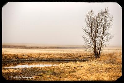 Fallow Field in Fog