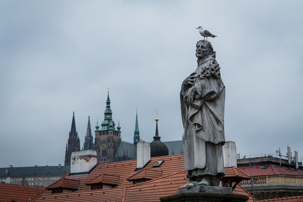 Cathedral, Statue and Gull