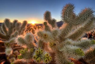 Chollas Garden Sunrise