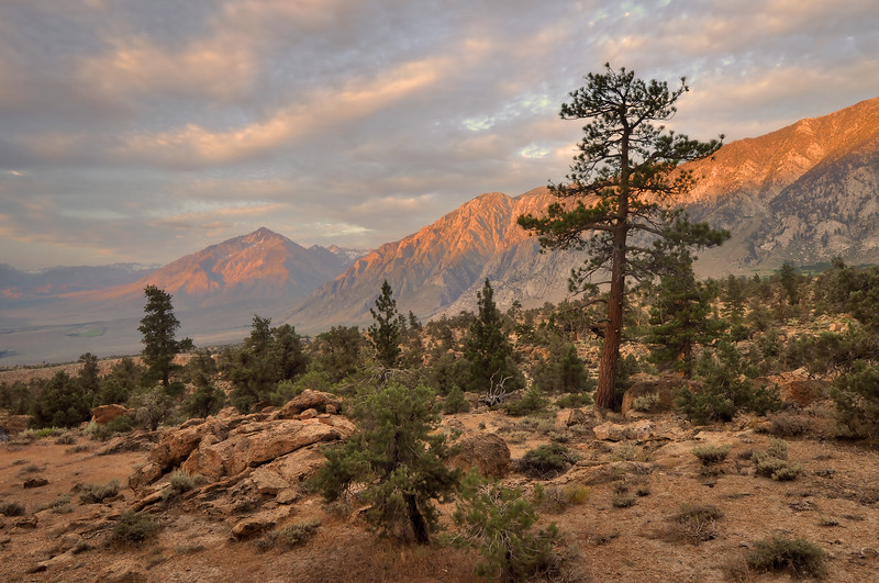 Sunrise of Wheeler Ridge and Mt. Tom North of Bishop, California.  Copyright © 2011 All rights reserved.
