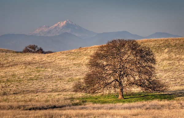 Prairie Tree and Mount Shasta Red Bluff, California.  Copyright © 2011 All rights reserved.