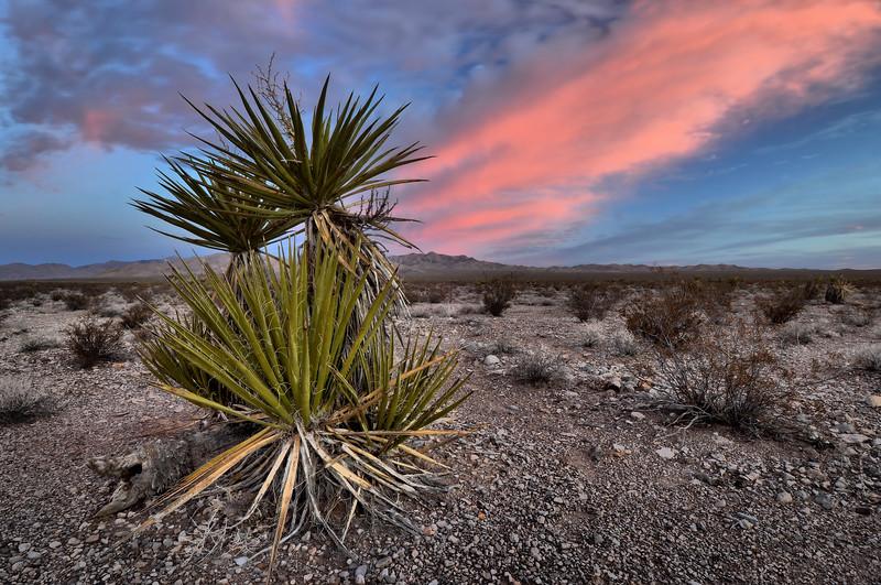 Sunrise in the Mojave Desert Mojave Desert National Preserve, California.  Copyright © 2010 All rights reserved