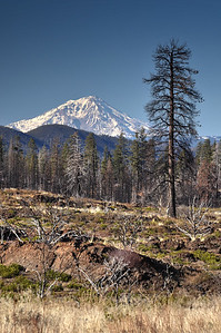Mount Shasta (Near Burney) Shasta County, California.  Copyright © 2011 All rights reserved.