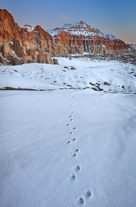 Tracks in the Snow Cathedral Gorge State Park, Nevada.  Copyright © 2011 All rights reserved.