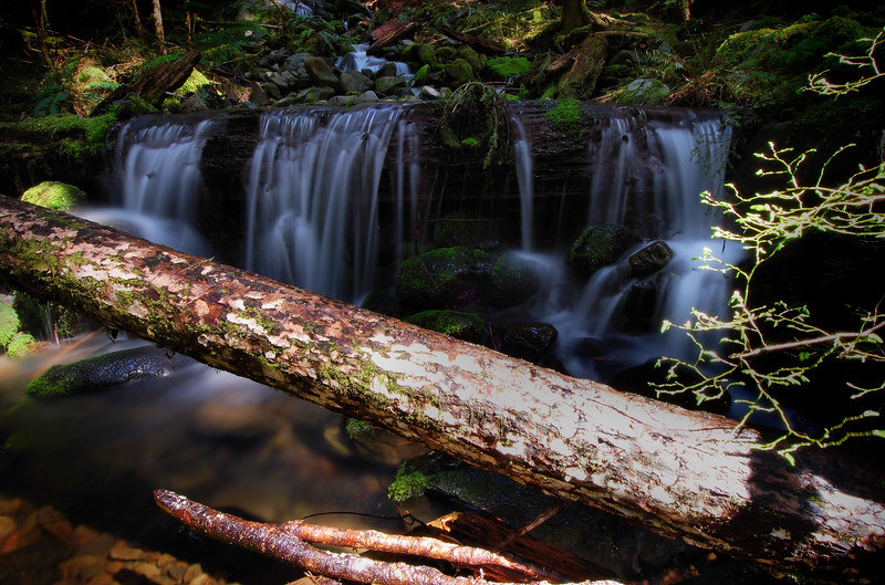 Log over Creek in the Sol Duc Forest Olympic National Park, Washington.  Copyright © 2008 All rights reserved.
