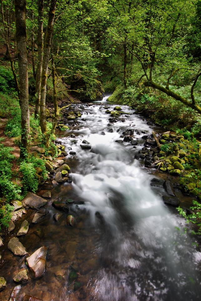 Bridal Veil Creek<br /> Columbia River Gorge, Oregon.<br /> <br /> Copyright © 2008<br /> All rights reserved.