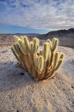 Cactus Morning