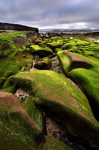 Mossy Sandstone  Coast Boulevard Park. La Jolla, California.  Copyright © 2011 All rights reserved.