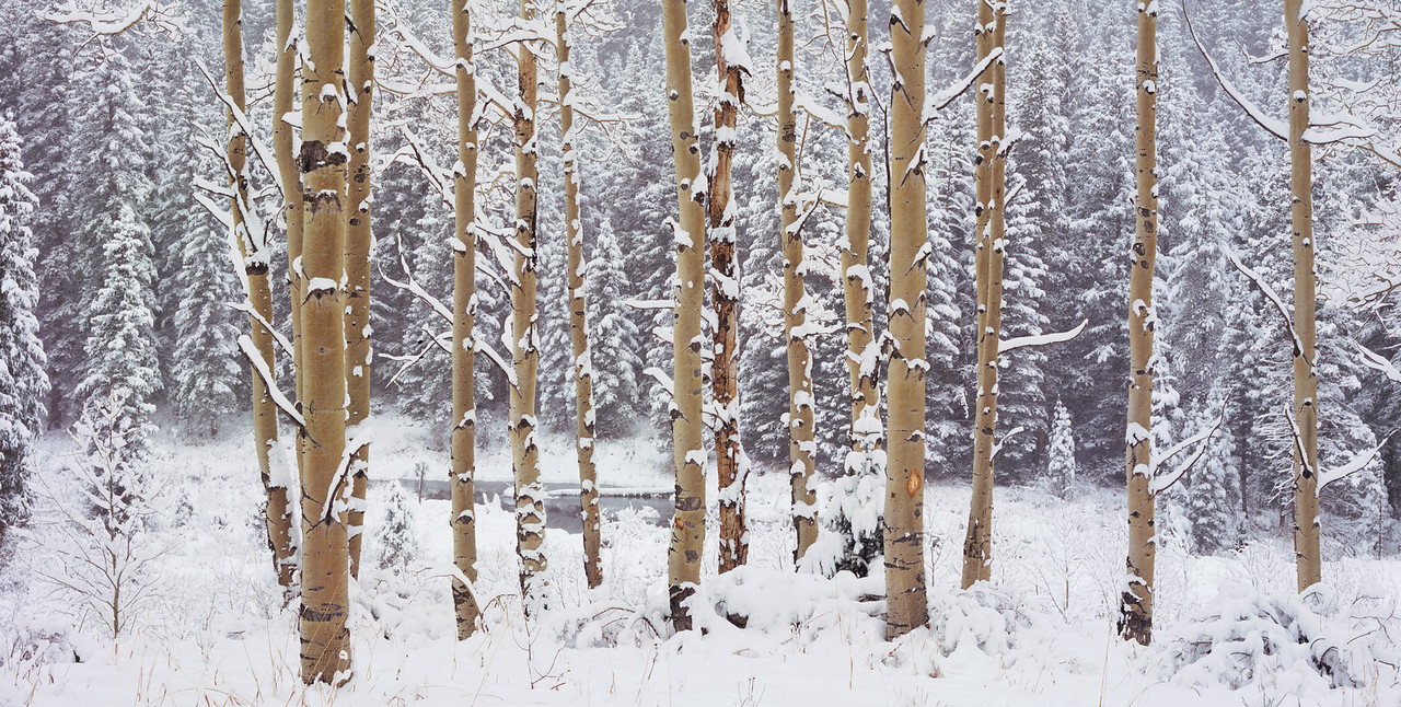 Winter-Aspens-crop