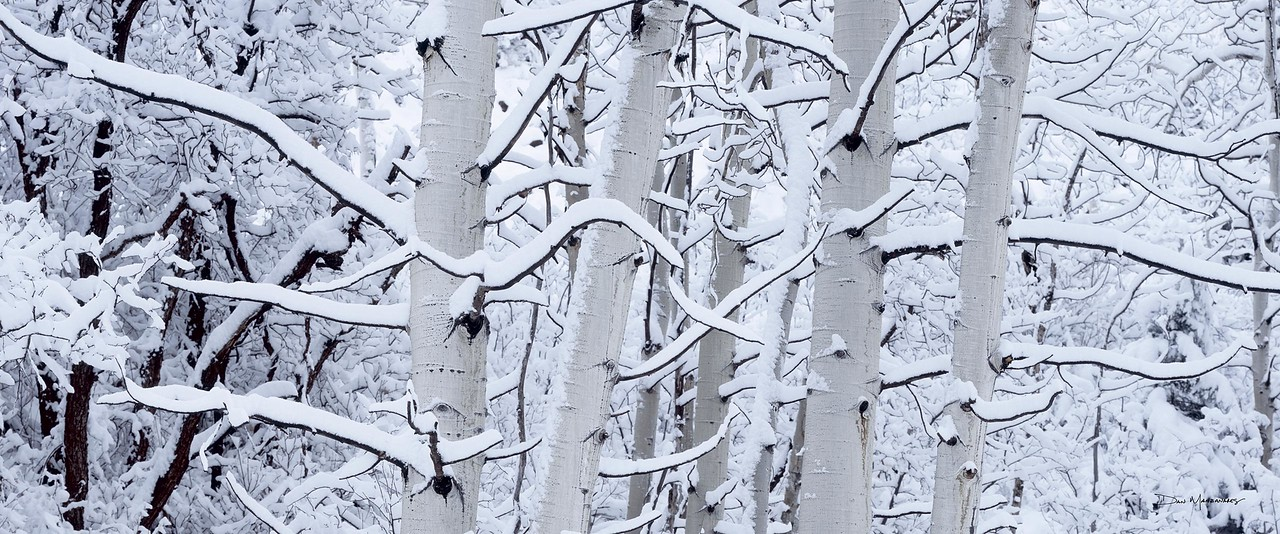winter-aspens-crop-WEB