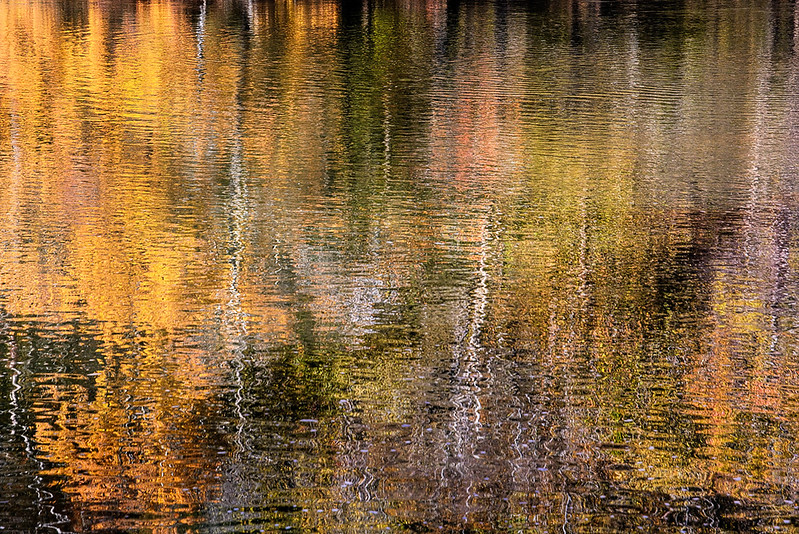 (Fall) Reflections #6