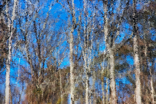 (Winter) Reflections #8